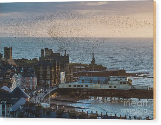 Starlings Over Aberystwyth On The West Wales Coast Wood Print
