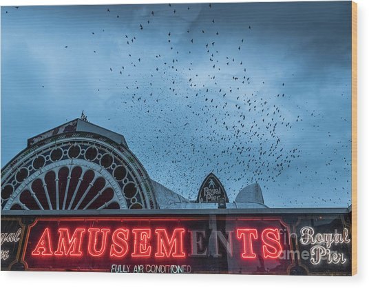 Starlings Over Aberystwyth Royal Pier Wood Print