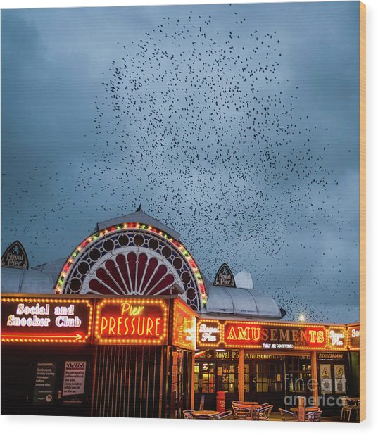 Starlings Over The Neon Lights Of Aberystwyth Pier Wood Print