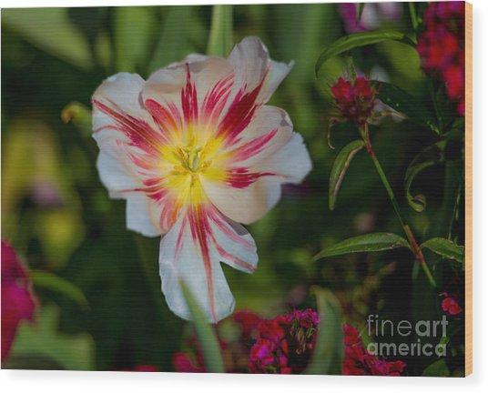 Starry Tulip Wood Print