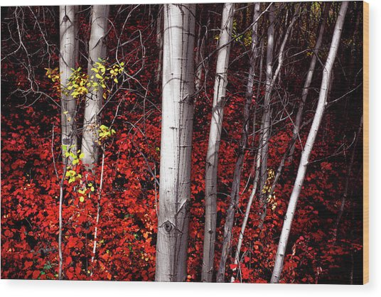 Stealing Beauty Wood Print