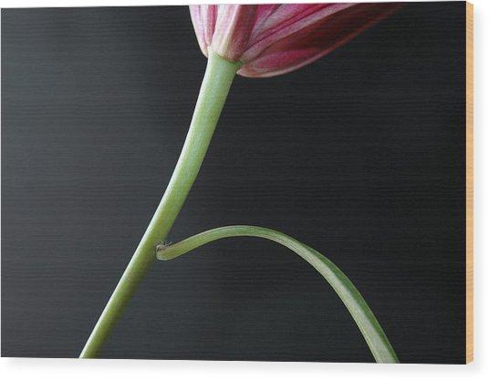 Stem And Leaf Wood Print by Dan Holm