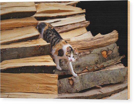 Stepping Down - Calico Cat On Beech Woodpile Wood Print by Menega Sabidussi