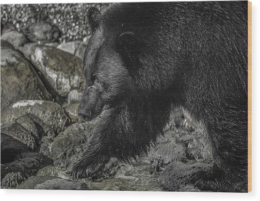 Stepping Into The Creek Black Bear Wood Print