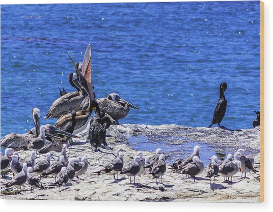 Pelican Sticking His Neck Out Wood Print
