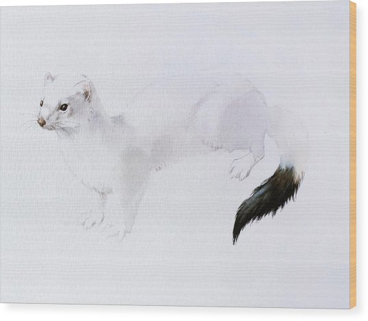 Stoat Watercolor Wood Print