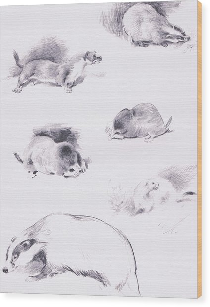 Stoat, Weasel, Badger And Mole Wood Print