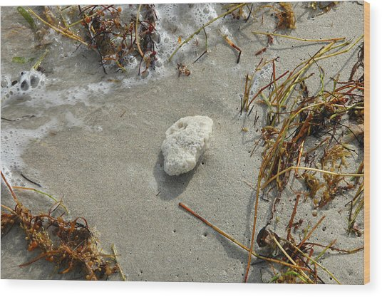 Stone At The Shore - South Beach Wood Print