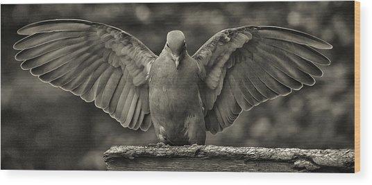 Stone Dove Landing Wood Print