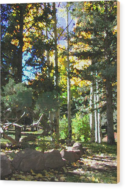 Stone Park Trails Wood Print