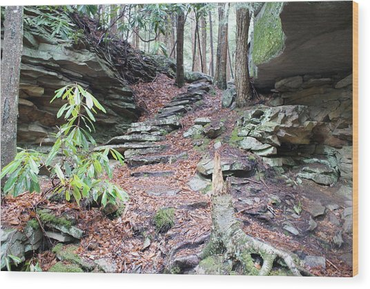 Stone Path Wood Print by Heather Green