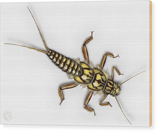 Stonefly Larva Nymph Plecoptera Perla Marginata - Steinflue -  Wood Print