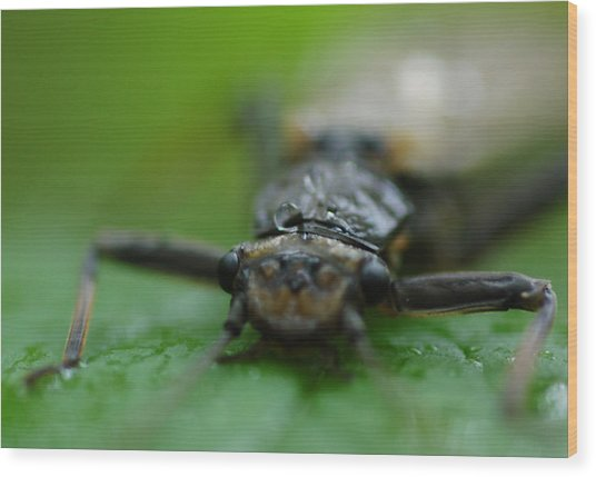 Stonefly Wood Print by Scott Gould