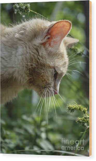 Stop And Smell The Flowers 9433a Wood Print