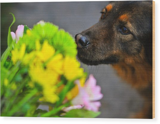 Stop And Smell The Flowers Wood Print by Mandy Wiltse