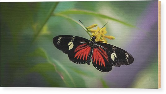 Wood Print featuring the photograph Butterfly, Stop And Smell The Flowers by Cindy Lark Hartman