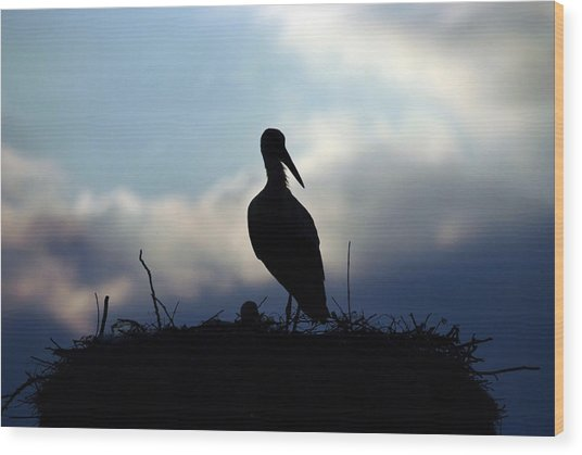 Stork In Evening Light Wood Print