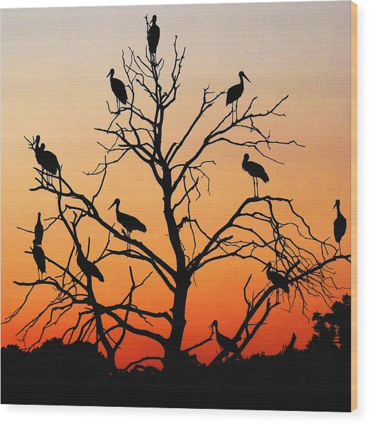 Storks In The Evening Sun Light Wood Print
