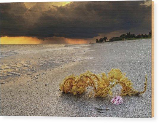 Storm And Sea Shell On Sanibel Wood Print