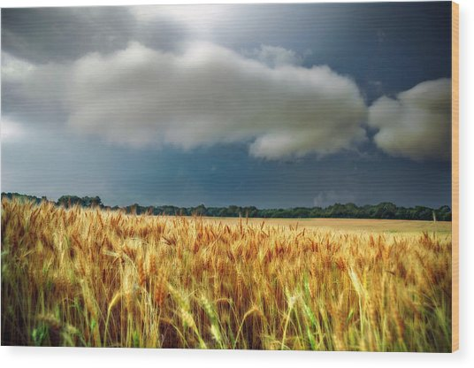 Storm Over Ripening Wheat Wood Print