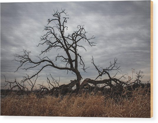 Wood Print featuring the photograph Storms Make Trees Take Deeper Roots  by Viviana  Nadowski