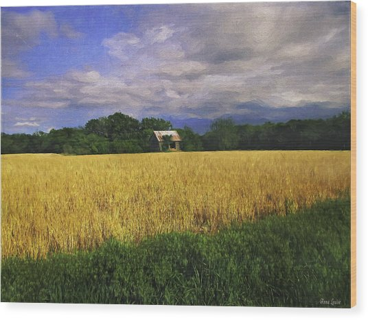 Stormy Old Barn In Wheat Field 2 Wood Print