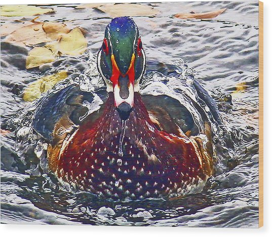 Straight Ahead Wood Duck Wood Print