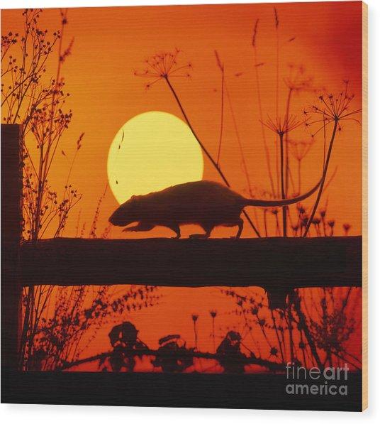 Stranglers Rattus Norvegicus Rat Wood Print