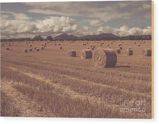 Straw Bales In A Field 4 Wood Print