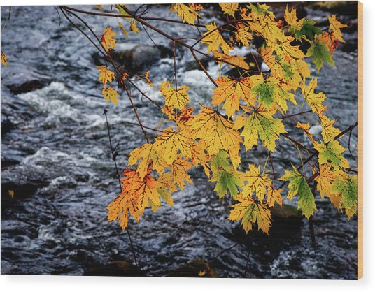 Stream In Fall Wood Print