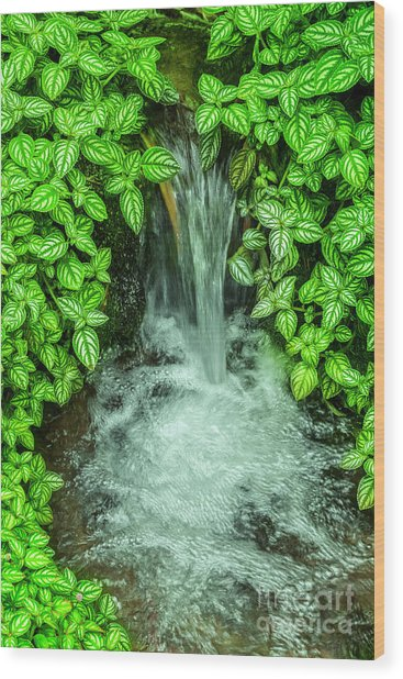 Streaming In The Green Wood Print