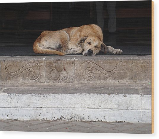 Street Dog Sleeping On Steps Wood Print