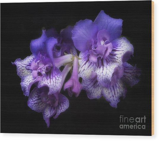 Streptocarpus 'blue Frills' Wood Print