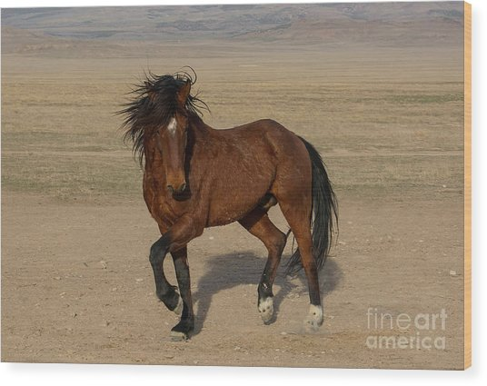 Striking A Pose Wood Print by Nicole Markmann Nelson