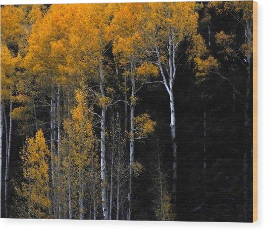 Striking Gold Wood Print