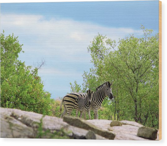 Mama, Who's That Idiot Taking My Picture? Wood Print