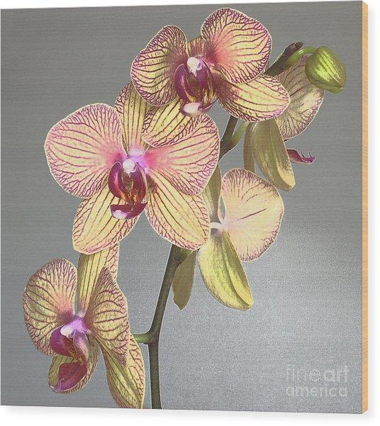 Striped Phalaenopsis Wood Print by Addie Hocynec
