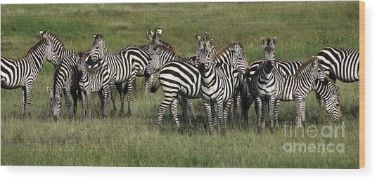 Stripes - Serengeti Plains Wood Print