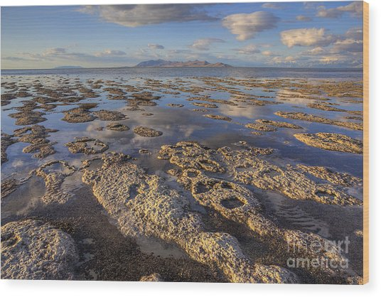 Stromatolites And Antelope Island Wood Print