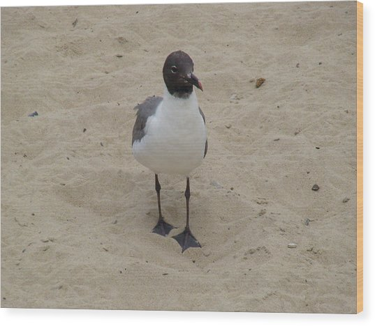 Struttin' Seagull  Wood Print
