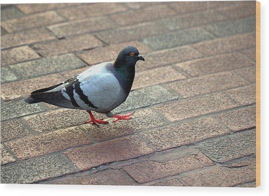 Strutting Pigeon Wood Print
