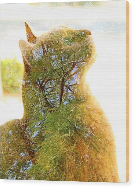 Stuck In Cat Wood Print
