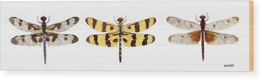 Study Of A Banded Pennant A Halloween Pennant And A Calico Pennant  Wood Print