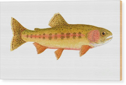 Study Of A Golden Trout Wood Print
