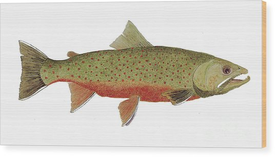 Study Of A Male Dolly Varden Char Wood Print