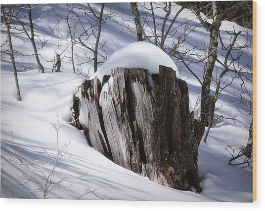 Stump Wood Print