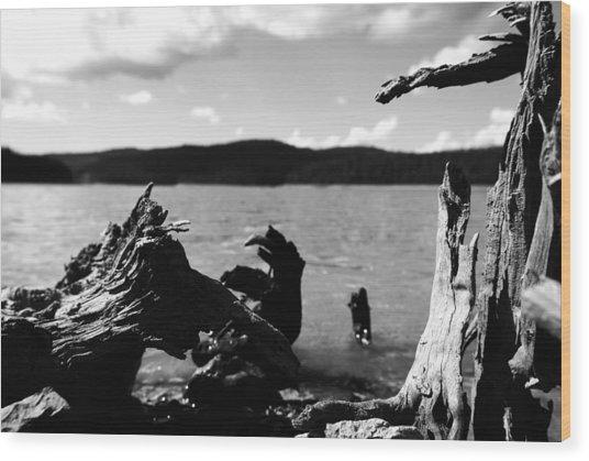 Stump Lake Wood Print by Tom Melo