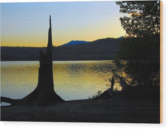 Stumped At Sunset Wood Print