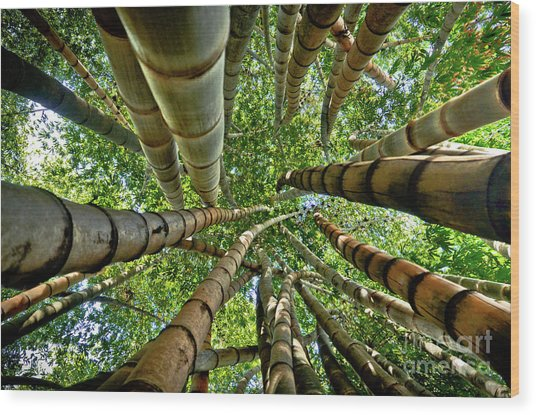 Stunning Bamboo Forest - Color Wood Print