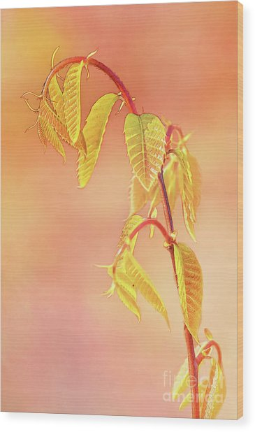 Stylized Baby Chestnut Leaves Wood Print
